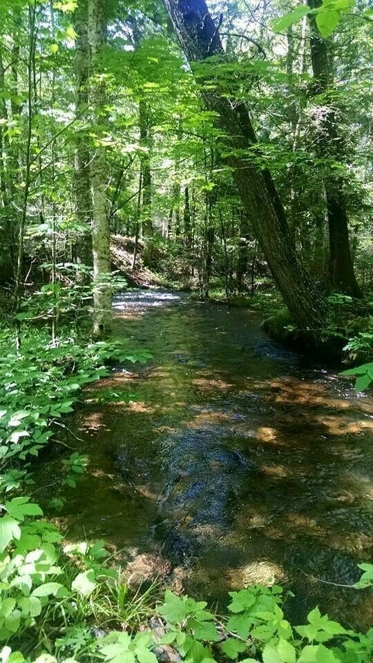 living off the grid by a wooded stream