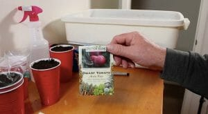 planting tomato and pepper seeds