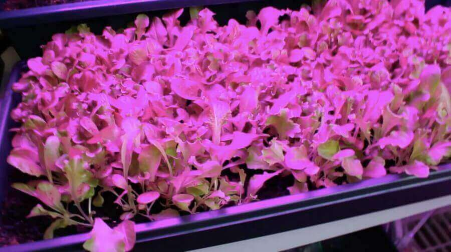 Unifun grow lights for seed starts