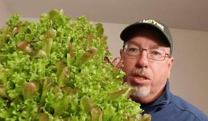 how to start growing lettuce indoors