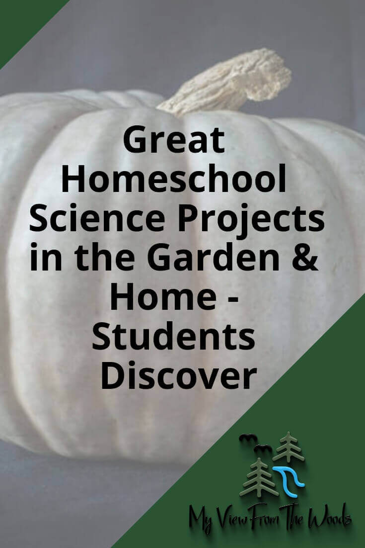 students discover homeschool science projects