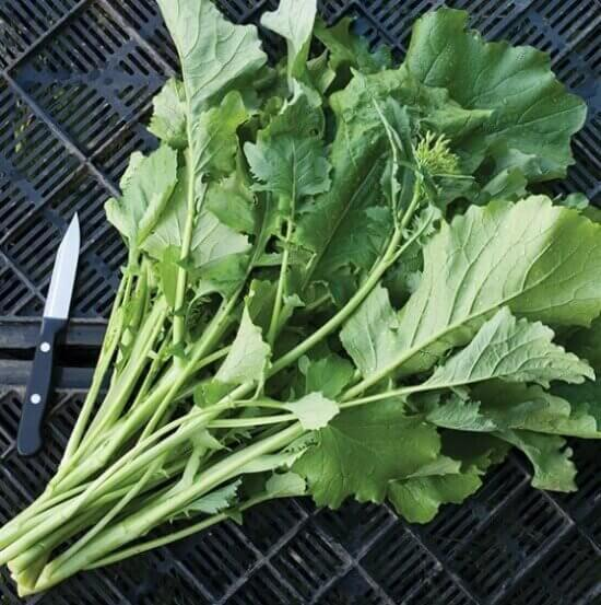 broccoli rabe greens