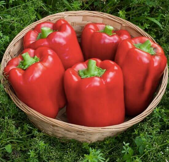 California Wonder Peppers